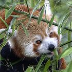 Crazy about bamboo by Thea 65
