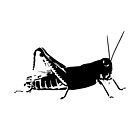 Young Grasshopper by Spencer Tymchak