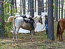 Hard Working Horses by Susan S. Kline