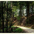 Through the forest #1 by Ronny Falkenstein