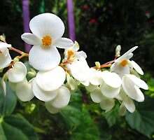 Flowers of the West Indies by Julia Findling