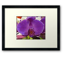 Orchid, Changi Airport, Singapore Framed Print