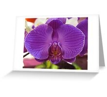 Orchid, Changi Airport, Singapore Greeting Card