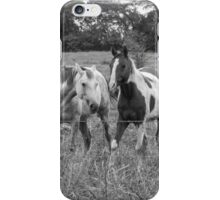 Horse play iPhone Case/Skin