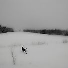 Dog in Snow Field (Kinkora, Prince Edward Island, Canada, December 2011) by Edward A. Lentz