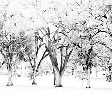 Trees bw CSU Oval by Camila Bruce Photography