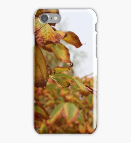 FALL TRANSITION iPhone Case/Skin