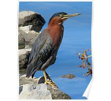 I'm a Little Green (Heron) Poster