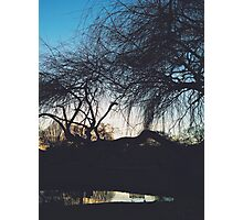 Sunset Silhouette through the Branches Photographic Print