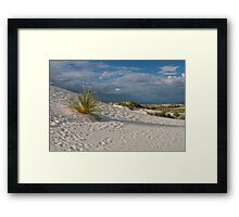 Long Shadow of the Yucca Framed Print