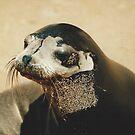 Fur Seal by Darren Freak