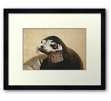 Fur Seal Framed Print