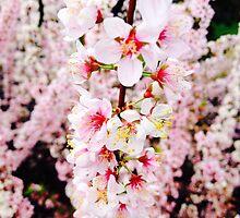 Blossom  by Sarah Barclay
