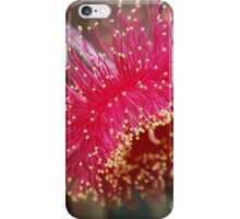 Eucalyptus Bloss by Lorraine McCarthy iPhone Case/Skin