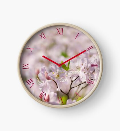 Stems of pink Rhododendron Clock