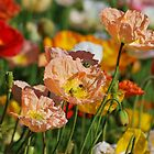 Poppy Season By Lorraine McCarthy by Lozzar Flowers & Art