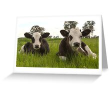 Two Little Calves ... Greeting Card