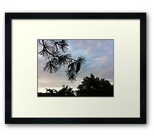 """Pine Cone"" Framed Print"
