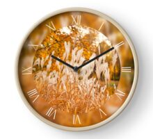 Clumps of Miscanthus ornamental grass Clock
