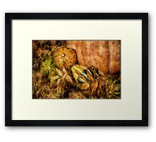 Gourds and Leaves Of Autumn Framed Print