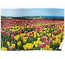 Sea of Tulips Poster