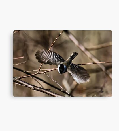 Dive Bomber Canvas Print