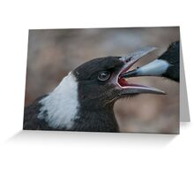 Baby Magpie 2 Greeting Card