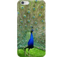 Who Can Resist Me? - Peacock - NZ iPhone Case/Skin