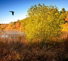 Hammond Pond Reservation by LudaNayvelt