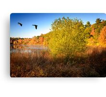 Hammond Pond Reservation Canvas Print