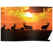 Red Hartebeest - Freedom is Golden - African Wildlife Poster
