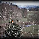 Robin - Ruskin's View. England. Winter. by David Dutton