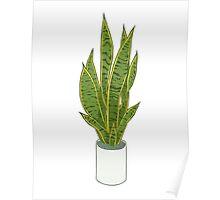 Sansevieria Trifasciata / Snake Plant (white) Poster
