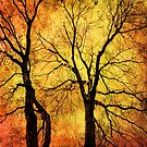 Autumn Trees by LudaNayvelt