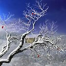 Red Apples II by Igor Zenin
