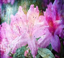My old hot pink Rhododendron by RGKphotos