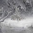 Snowfall by Igor Zenin