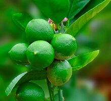 Lemons or Limes? by Margaret Stevens