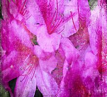 My old hot pink Rhododendron 2 by RGKphotos