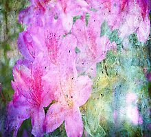 My old hot pink Rhododendron 3 by RGKphotos