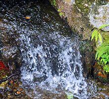 Kyoto Wonders of Water by Sue Ballyn