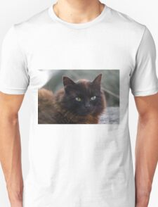 curious cat Unisex T-Shirt