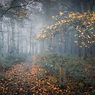 Last Autumn Tree by Svetlana Sewell