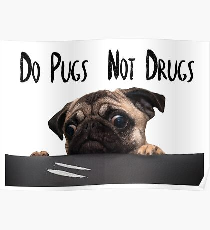 Stylized Pugs not Drugs Poster