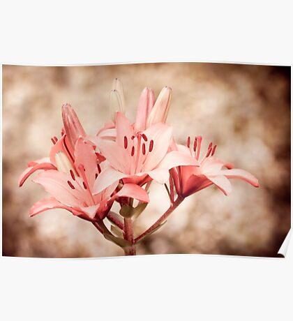 Flowering lily plant sepia toned Poster