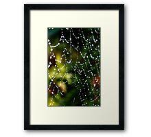 Spider Web Dew Framed Print