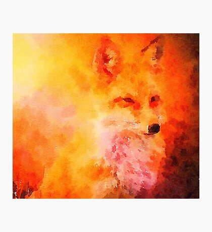 Soft Fox Photographic Print