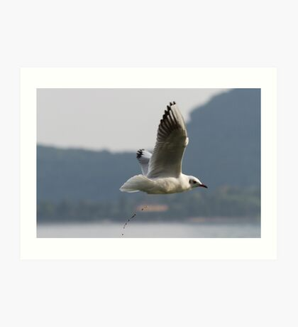 seagull flying over the lake while evacuating Art Print