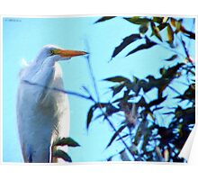 Great Snowy Egret Poster