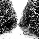 Winter Trail In Black And White by Debbie Oppermann